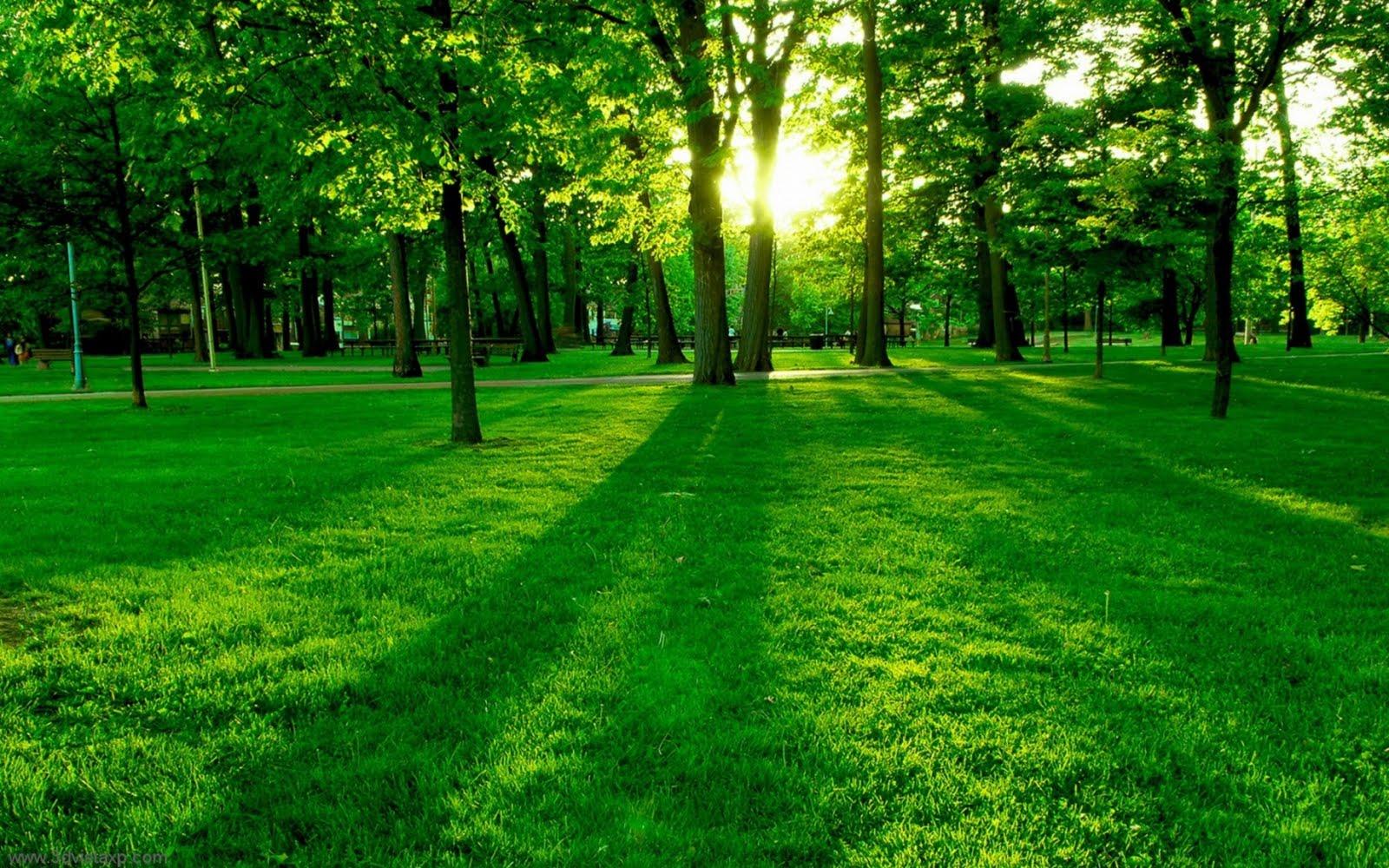 grön-park